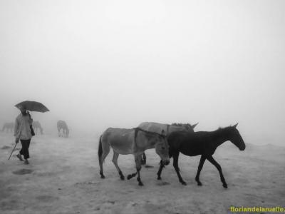chevauxconduitssouslabrume