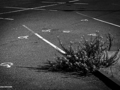 plante_et_handicap